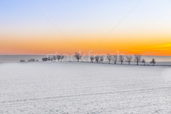 Stock fotó: Tél · tájkép · fa · sikátor · naplemente · fényes