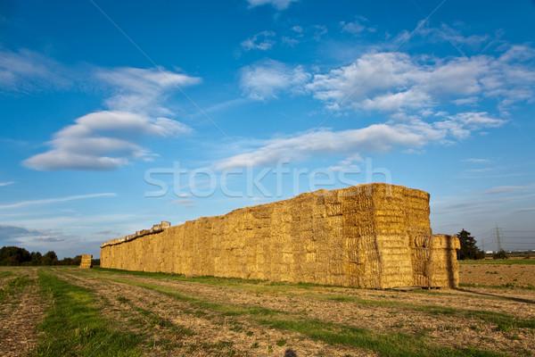Baal stro intensief kleuren hemel zon Stockfoto © meinzahn