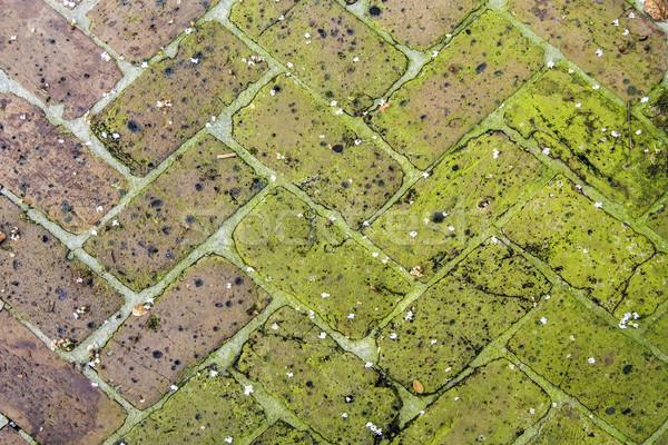 Oude tegels trottoir planten gewrichten achtergrond Stockfoto © meinzahn