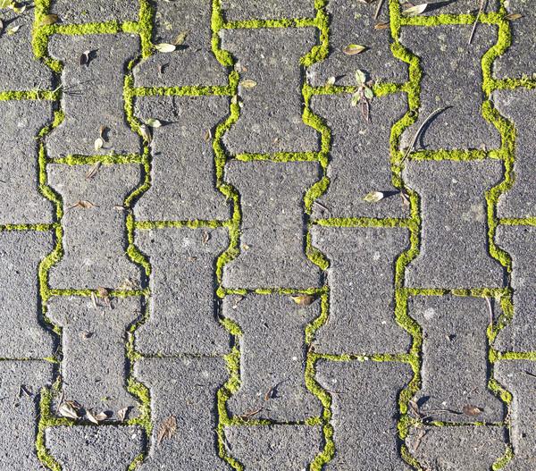 Harmônico padrão piso estrutura erva daninha parede Foto stock © meinzahn