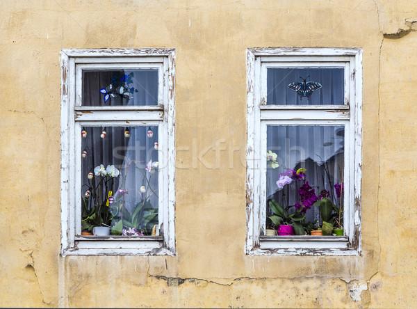 Ablak orchidea virág dekoráció bent öreg Stock fotó © meinzahn