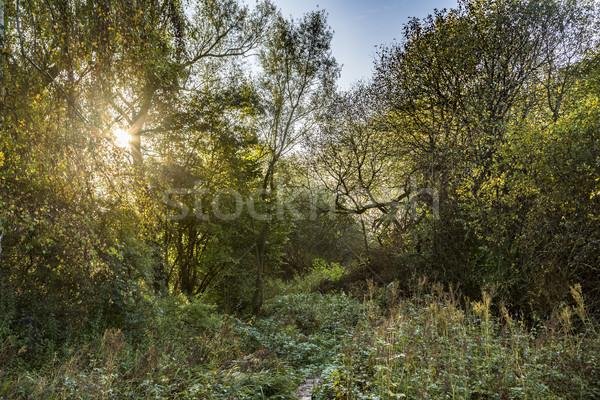 sunrise in rural Eifel landscape  Stock photo © meinzahn