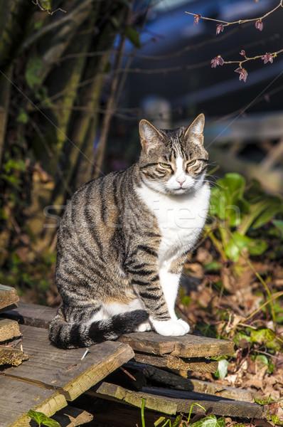 Сток-фото: небольшой · котенка · саду · Cute · кошки · дома