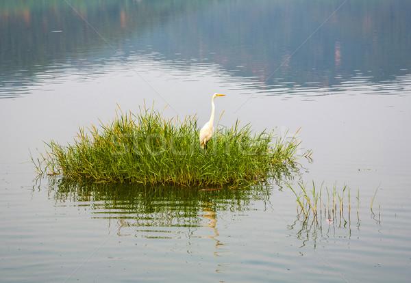 аистов трава человека озеро Индия птица Сток-фото © meinzahn