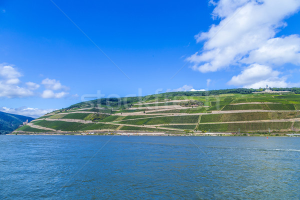 beautiful vineyards at  the rhine valley in Ruedesheim Stock photo © meinzahn