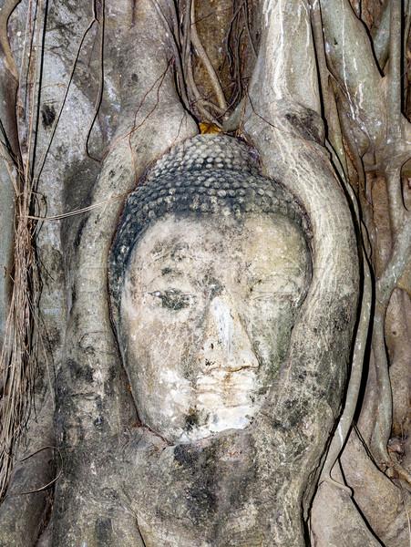 Cabeza templo cubierto raíces árbol Foto stock © meinzahn