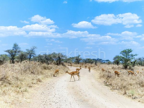 Csoport Serengeti természet utazás Afrika állatok Stock fotó © meinzahn