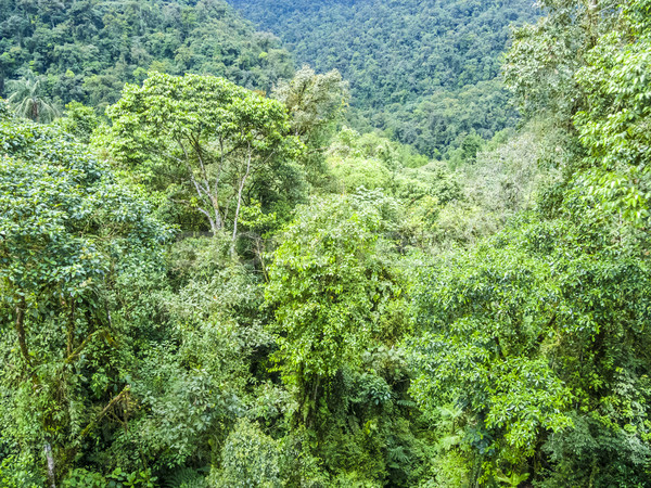 Verde foresta pluviale giungla parco Brasile natura Foto d'archivio © meinzahn