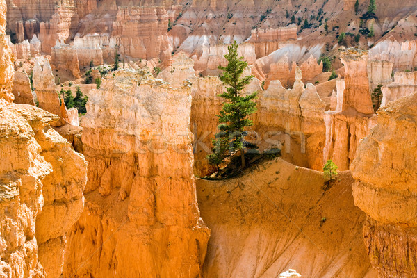 Lus parcours Wall Street canyon park Utah Stockfoto © meinzahn