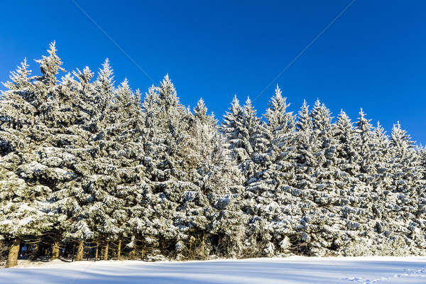 Neve coperto rami albero cielo blu natura Foto d'archivio © meinzahn