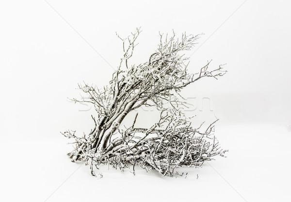 Pine bomen sneeuw sneeuwstorm bergen boom Stockfoto © meinzahn
