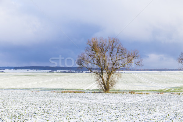 Stockfoto: Boom · landelijk · winter · landschap · eenzaam · hemel