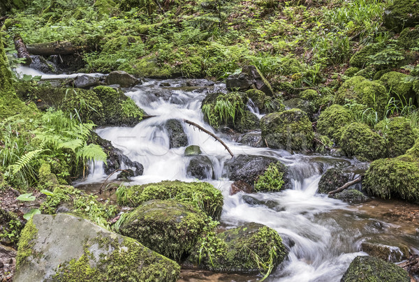 creek in the forest flows over stones covered with moss Stock photo © meinzahn