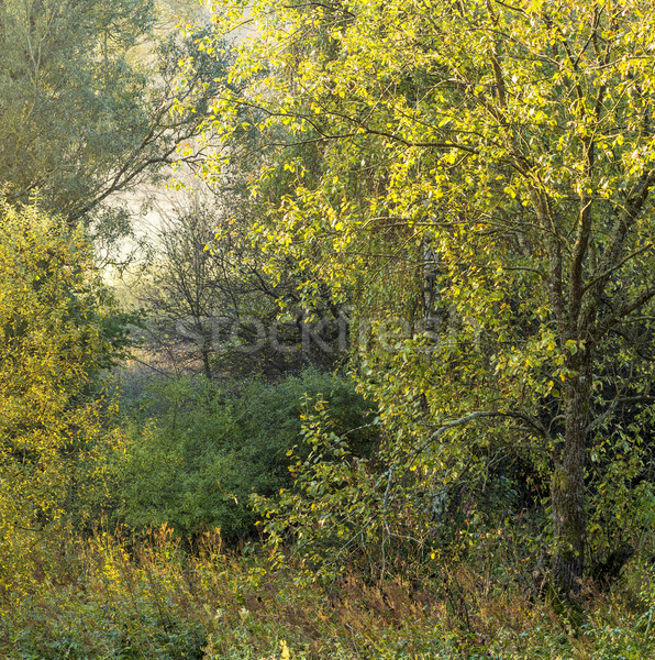 Multicolored leaves of trees in indian summer Stock photo © meinzahn