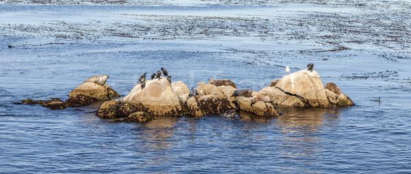 Morza inny ptaków relaks rock niebieski Zdjęcia stock © meinzahn