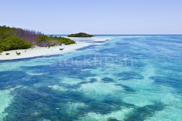 beautiful scenic beaches and clear water in the Keys  Stock photo © meinzahn