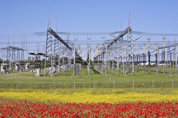 Elektryczne elektrownia kolorowy łące piękna kwiat Zdjęcia stock © meinzahn