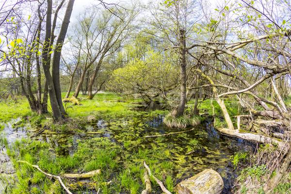 Romantyczny lasu charakter parku drzewo trawy Zdjęcia stock © meinzahn