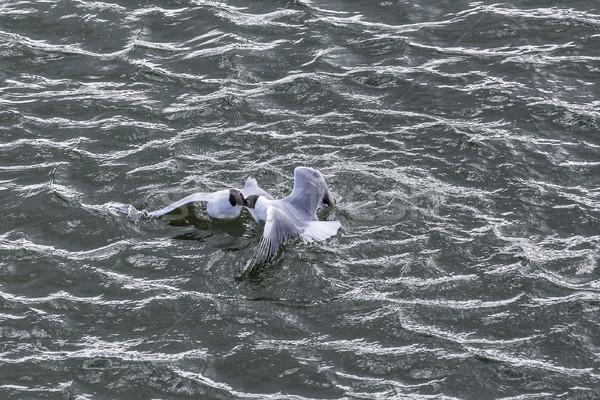 Mewy wybrzeża morze bałtyckie ocean ptaków Zdjęcia stock © meinzahn