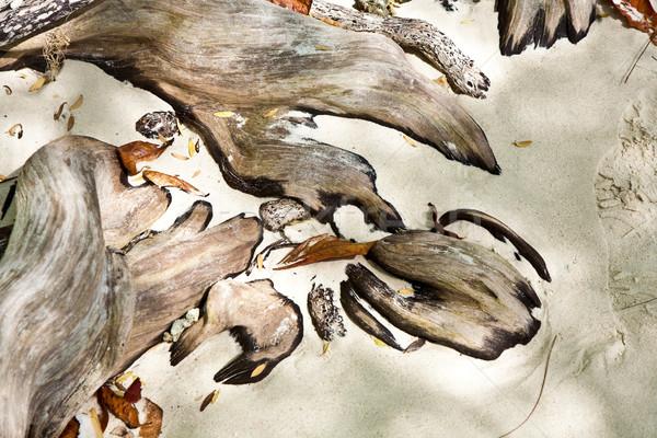 Harmonisch structuur hout bladeren strand achtergrond Stockfoto © meinzahn