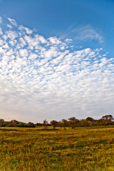 acres with grass and trees in golden light and beautiful landsca Stock photo © meinzahn