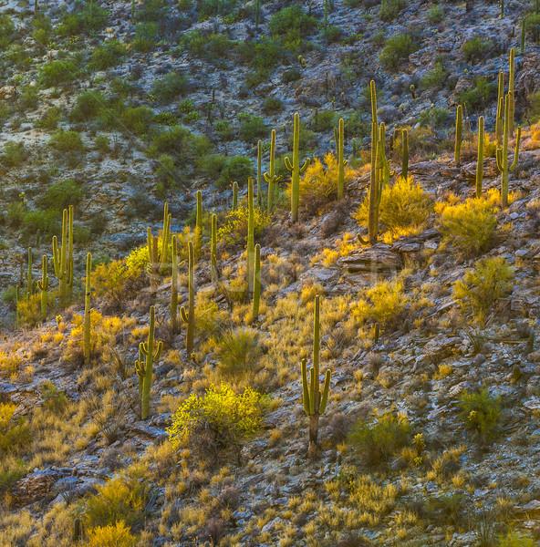 Sonnenuntergang schönen grünen Landschaft Wüste Himmel Stock foto © meinzahn