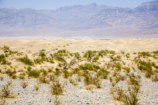 Sand Dunes of Mesquite Flats desert, Death Valley Stock photo © meinzahn