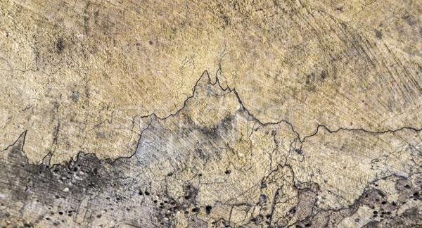 古い木材 幹 高調波 構造 ストックフォト © meinzahn