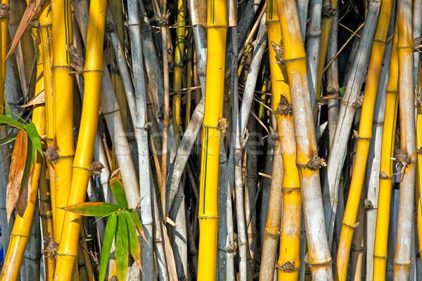 Bambus Park Knall Schmerzen Palast Bangkok Stock foto © meinzahn