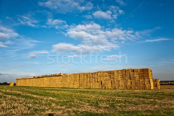 Bela słomy Błękitne niebo jesienią intensywny kolory Zdjęcia stock © meinzahn