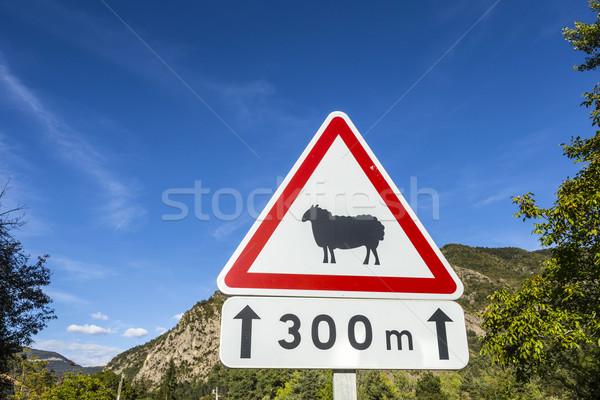 Straat teken schapen waarschuwing blauwe hemel hemel Blauw Stockfoto © meinzahn