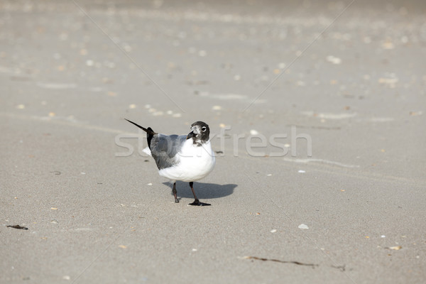 seagull with lost feet at the beach Stock photo © meinzahn