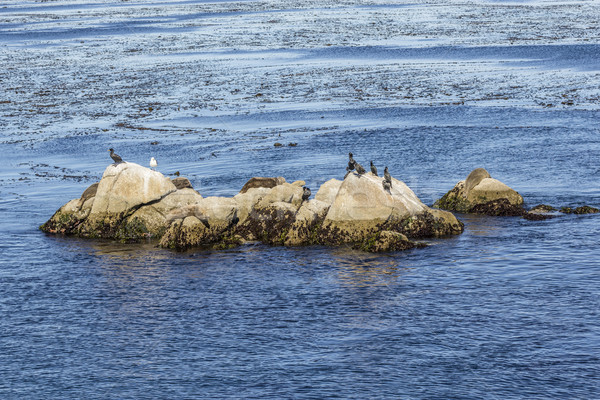 sea Lions, cormorants and other birds relax at a rock in the oce Stock photo © meinzahn