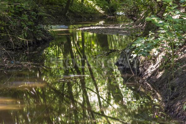 Bella piccolo torrente verde alberi raggi di sole Foto d'archivio © meinzahn