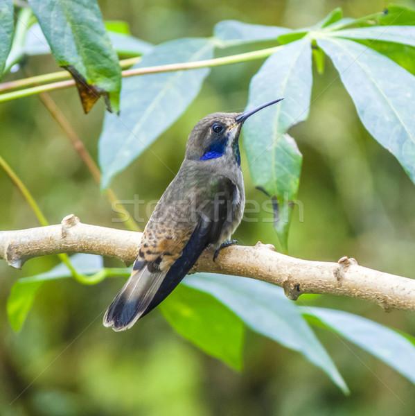 Brasil estação pássaro tropical Equador Foto stock © meinzahn