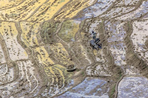 farmer works on rice paddies in terracced fields  Stock photo © meinzahn