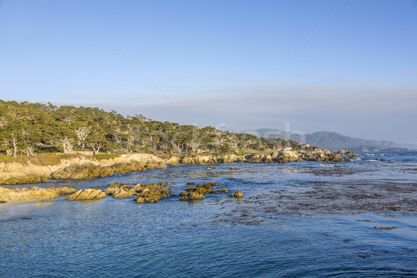 coastline at Point Lobos in Sunset Stock photo © meinzahn