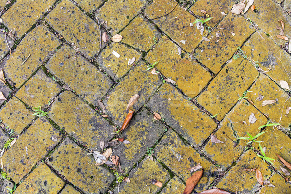 old tiles at the sidewalk with plants in the joints Stock photo © meinzahn