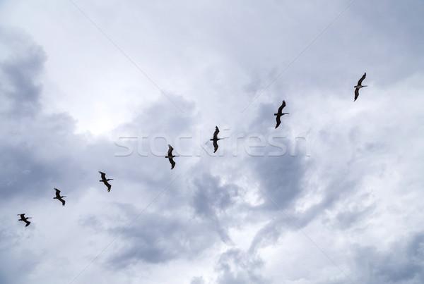 birds flying in rain over the ocean Stock photo © meinzahn