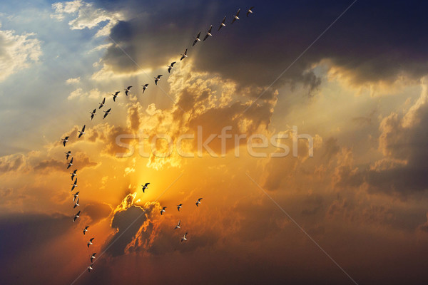 spectacular golden sunset with clouds Stock photo © meinzahn
