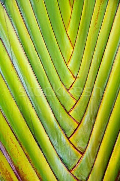 Details palmbladeren geven harmonisch structuur textuur Stockfoto © meinzahn