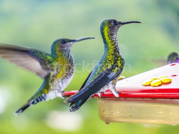 ブラジル 駅 鳥 熱帯 エクアドル ストックフォト © meinzahn