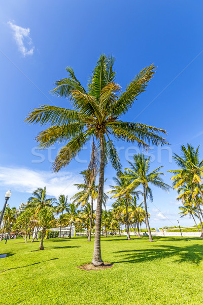 beautiful Miami Beach with palm trees Stock photo © meinzahn