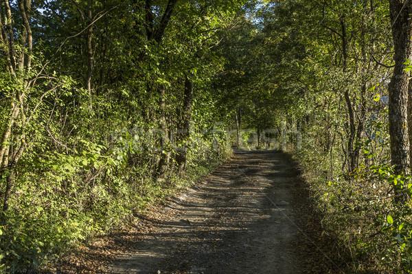typical narrow road through the dense forest   Stock photo © meinzahn