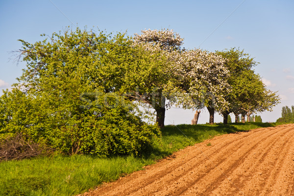 plowed acres and trees with blue sky, magnificent landscape Stock photo © meinzahn