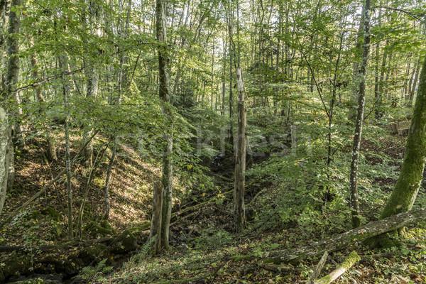 Fák vadon völgy reggel zöld napfelkelte Stock fotó © meinzahn