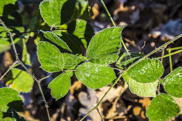 Bladeren aarde harmonisch patroon eik bos Stockfoto © meinzahn