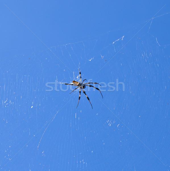 Pók háló kék ég égbolt háttér lábak Stock fotó © meinzahn