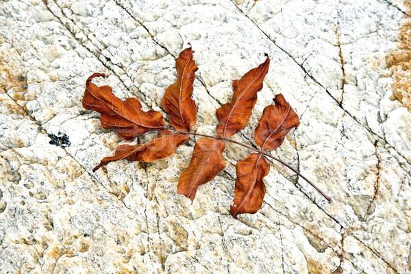 beautiful structured leaves at the beach arranged by nature in a Stock photo © meinzahn