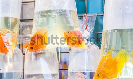 Stock photo: Bags with tropical fishes for sale